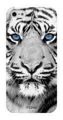 Blue Eyes Collection Tiger